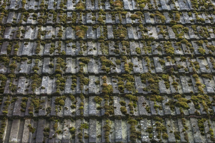 MOSS AND ALGAE REMOVAL PLYMOUTH